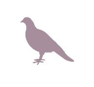 Гълъби